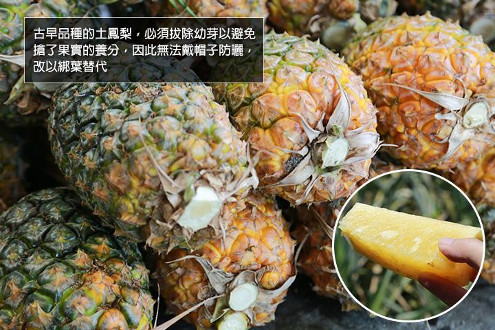 二湖土鳳梨的一大特色是不留尾巴,剖開之後的鳳梨果香撲鼻,口感清甜多汁